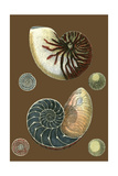 Shells on Cocoa I Premium Giclee Print