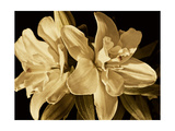 Yvoire Flower II Reproduction giclée Premium par Rachel Perry