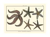 Sea Shells X Poster