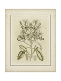 Small Tinted Botanical I Premium Giclee Print by Samuel Curtis