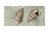 Weathered Shells VI 2-Up Premium Giclee Print by Kate Ward Thacker