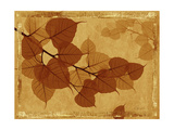 Ghost Leaves I Premium Giclee Print by Noah Bay
