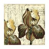 Printed Vintage Composition III Premium Giclee Print by  Vision Studio