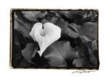 Floral Elegance III Premium Giclee Print by Laura Denardo
