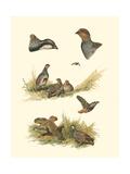 Partridge Giclee Print