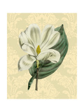 Magnolia with Background Prints