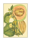 Exotic Melons IV Posters by  Vision Studio