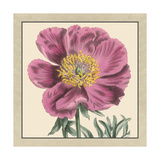 Small Peony Collection III Premium Giclee Print by  Vision Studio