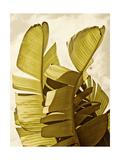 Rachel Perry - Palm Fronds III - Poster