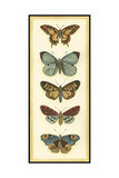 Small Butterfly Collector VI Posters by Chariklia Zarris