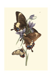 Butterflies and Flora III Posters by John Westwood