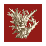 Small Coral on Red I Premium Giclee Print by  Vision Studio