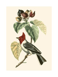 Cuvier Exotic Birds VI Prints by Georges Cuvier