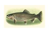 River Trout I Reproduction procédé giclée Premium