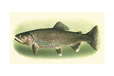 River Trout I Premium Giclee Print