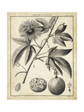 Passiflora I Prints by Charles Francois Sellier
