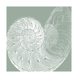 Seabreeze Shells IV Premium Giclee Print by  Vision Studio