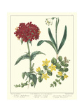 Gardener's Delight VIII Prints by Sydenham Teast Edwards