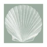 Seabreeze Shells II Poster af Vision Studio