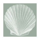 Seabreeze Shells II Poster by  Vision Studio
