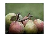 Comice Pears II Art by Rachel Perry