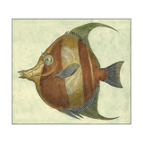 Small Angel Fish II Posters by  Vision Studio