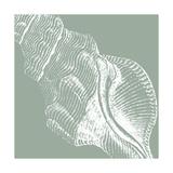 Seabreeze Shells III Premium Giclee Print by  Vision Studio