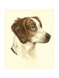 Danchin Brittany Spaniel Poster by  Danchin