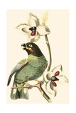 Cuvier Exotic Birds III Prints by Georges Cuvier