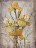 Golden Irises I Posters by Tim O'toole