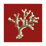 Small Coral on Red II Premium Giclee Print by  Vision Studio