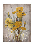 Golden Irises II Prints by Tim O'toole