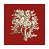 Small Coral on Red IV Premium Giclee Print by  Vision Studio