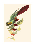 Cuvier Exotic Birds IV Posters by Georges Cuvier