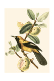 Cuvier Exotic Birds II Print by Georges Cuvier
