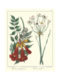 Gardener's Delight VI Print by Sydenham Teast Edwards