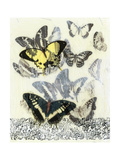 Butterfly Habitat I Posters by Jennifer Goldberger