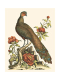 Small Regal Pheasants III Poster by George Edwards