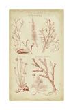 Coralline II Print by  Chambers