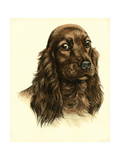 Danchin Red Cocker Spaniel Art by  Danchin