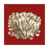 Small Coral on Red III Premium Giclee Print by  Vision Studio