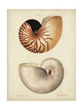 Antique Nautilus I Posters by George Wolfgang Knorr