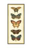 Small Butterfly Collector V Prints by Chariklia Zarris