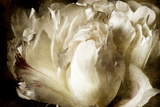 Elegant Peony I Giclée-Premiumdruck von Christine Zalewski