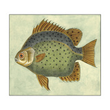 Small Butterfly Fish II Premium Giclee Print by  Vision Studio