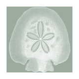 Seabreeze Shells I Giclee Print by Vision Studio
