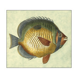 Small Butterfly Fish I Premium Giclee Print by  Vision Studio