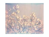 Flowering Dogwood II Print by Jason Johnson