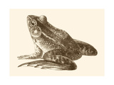 Sepia Frog I Posters