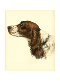 Danchin Cocker Spaniel Posters by  Danchin